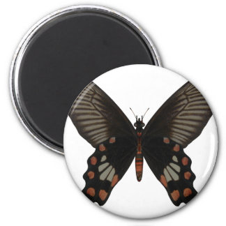 Rose Swallow Tail Butterfly Refrigerator Magnet