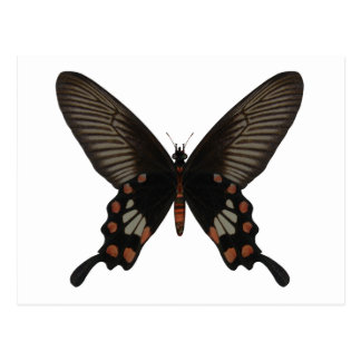 Rose Swallow Tail Butterfly Postcard