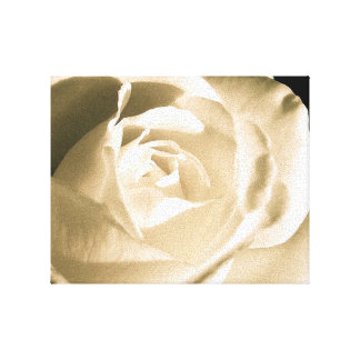 Rose White Stretched Canvas Prints
