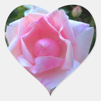 Rose White Pink Heart Sticker