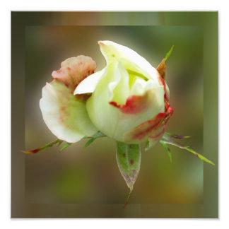 rosebud glowing photo art
