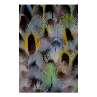 Rosella Feather Design Poster