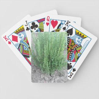 Rosemary plant in the garden . Tuscany, Italy Poker Deck