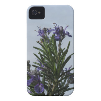 Rosemary plant with flowers against the sky iPhone 4 Case-Mate cases