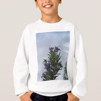 Rosemary plant with flowers against the sky sweatshirt