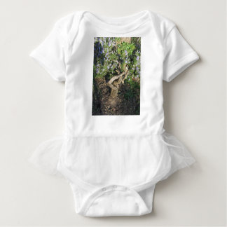 Rosemary plant with flowers in Tuscany, Italy Baby Bodysuit