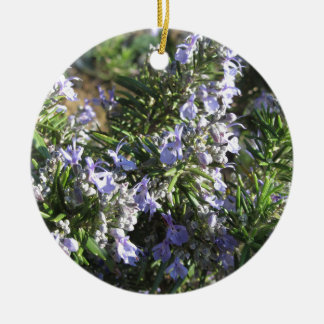 Rosemary plant with flowers in Tuscany, Italy Ceramic Ornament