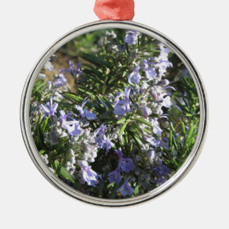 Rosemary plant with flowers in Tuscany, Italy Metal Ornament