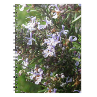 Rosemary plant with flowers in Tuscany, Italy Notebook