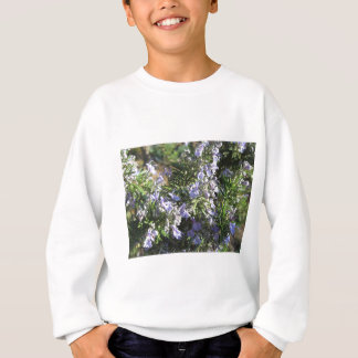Rosemary plant with flowers in Tuscany, Italy Sweatshirt