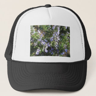 Rosemary plant with flowers in Tuscany, Italy Trucker Hat