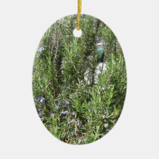 Rosemary plant with flowers . Tuscany, Italy Ceramic Ornament
