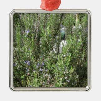 Rosemary plant with flowers . Tuscany, Italy Metal Ornament