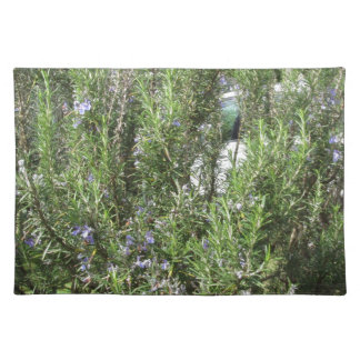 Rosemary plant with flowers . Tuscany, Italy Placemat