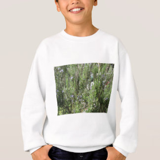 Rosemary plant with flowers . Tuscany, Italy Sweatshirt