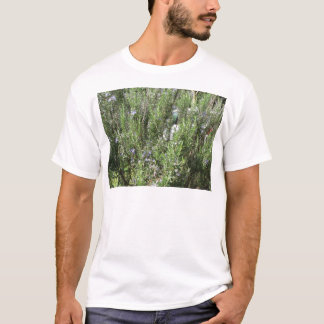 Rosemary plant with flowers . Tuscany, Italy T-Shirt