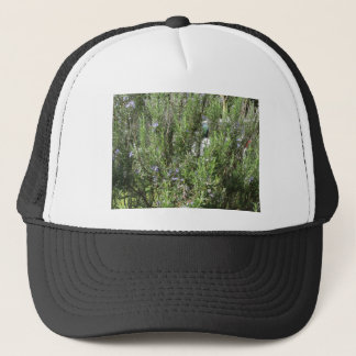 Rosemary plant with flowers . Tuscany, Italy Trucker Hat