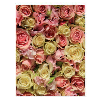 Roses and lathyrus by The Rose Garden Postcard