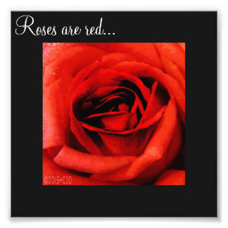 Roses are red... photo