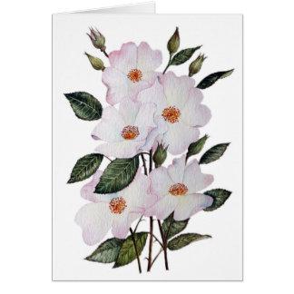 Roses 'Ballerina' Floral Art Card