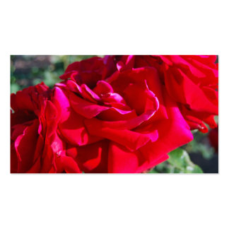 Roses Close up Pack Of Standard Business Cards