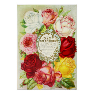 Roses Dingee and Conard Company Seed Catalogue Poster