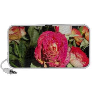 roses in the dark notebook speakers