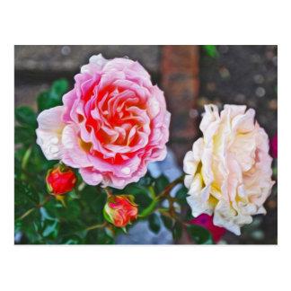 Roses in the rain postcard