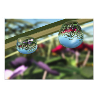 Roses on Raindrops Photo Print