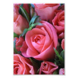 Roses Photo Print