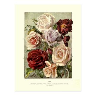 Roses Postcard