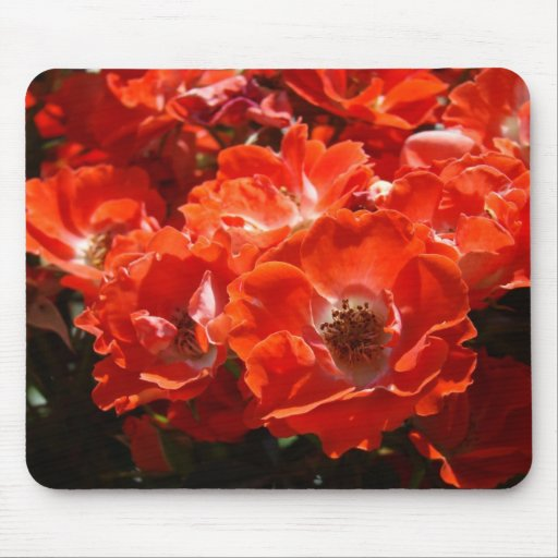 ROSES, ROSE FLOWERS MOUSE PADS MOUSEPAD