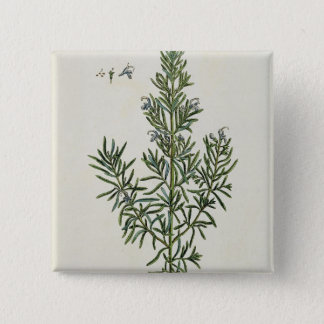 Rosmarinus Officinalis, from 'A Curious Herbal', 1 15 Cm Square Badge