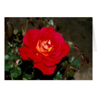 Rosy Cheeks hybrid tea rose Greeting Card