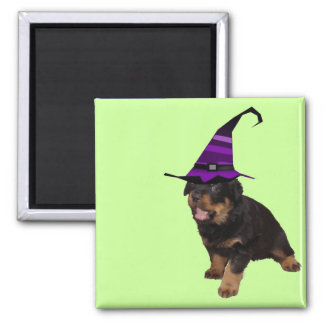 Rotten Witch Refrigerator Magnets
