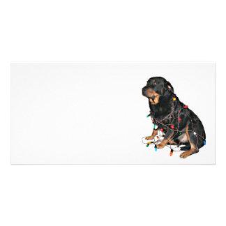 Rottie Christmas booboo Custom Photo Card