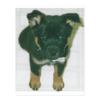 Rottie pup postcard