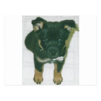 Rottie pup post cards