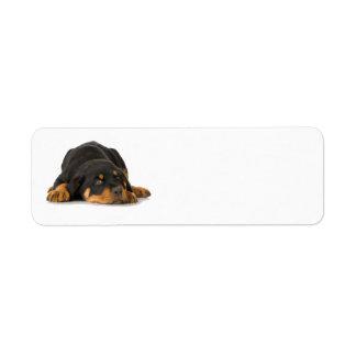 Rottweiler Address Label