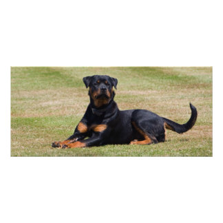 Rottweiler customizable dog bookmark, gift idea rack cards