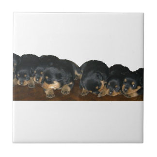 rottweiler Puppies Ceramic Tile