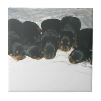 Rottweiler Puppies Tile