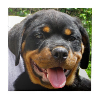 Rottweiler puppy face Dog Cute Ceramic Tile