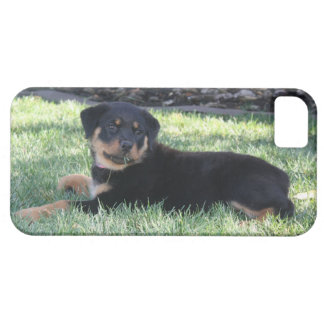 Rottweiler Puppy  phone case