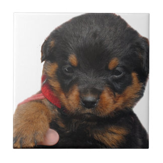Rottweiler Puppy Red Ceramic Tile