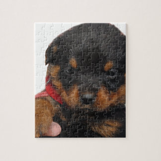 Rottweiler Puppy Red Jigsaw Puzzle