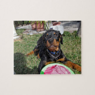 Rottweiler Puppy with Toy Puzzle