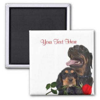 Rottweiler  Red Rose Valentine Design Square Magnet