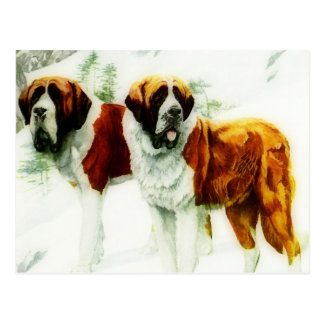 rough and smooth St Bernard - painting Postcard