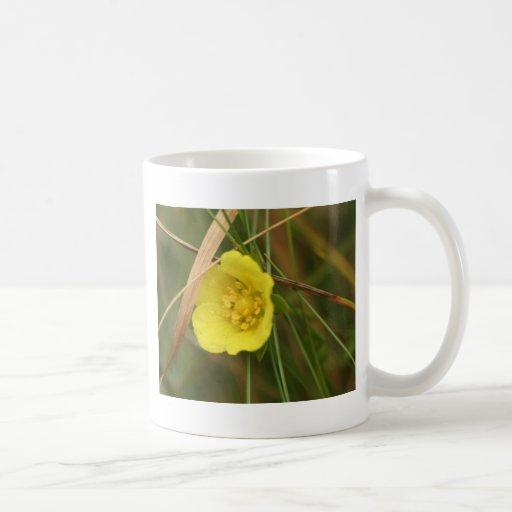 rough buttercup mug